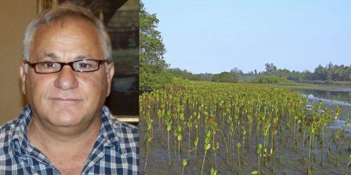 Homem planta 152 milhões de árvores e refloresta manguezal sozinho no Senegal