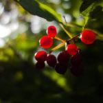 Nesta quarentena, aprenda a produzir frutas em apartamentos (em cinco passos)