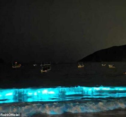 Após 60 anos, vida marinha volta a 'iluminar' praia de Acapulco, no México