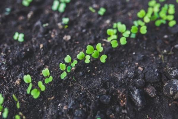Aprenda a reaproveitar sementes e raízes para plantar horta em casa