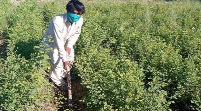 Paquistão está contratando desempregados para plantar 10 bilhões de árvores