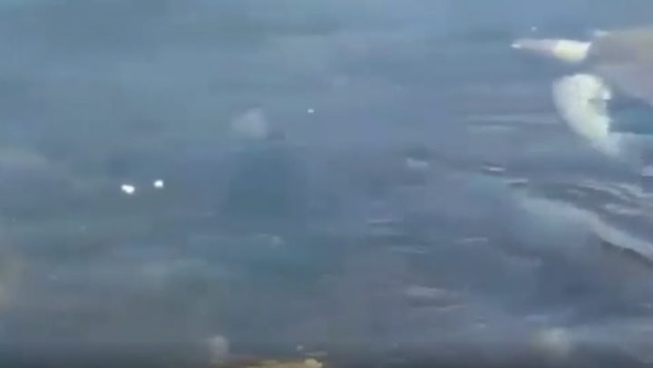 Tartarugas aparecem nadando em água cristalina da Baía de Guanabara no RJ