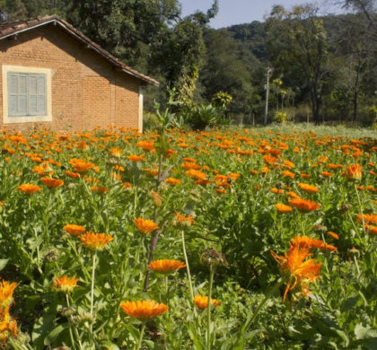 Agricultura biodinâmica: solução sustentável para os cultivos