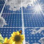 O caminho para revolucionar o uso da energia solar está na natureza, afirma estudo