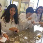 Estudantes de SP criam absorvente 100% biodegradável que se decompõe em 6 meses