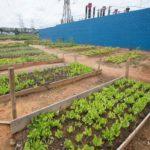 Projeto tem 80% de taxa de reciclagem e transforma local de despejo de resíduos em horta