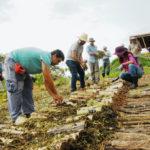Você sabe o que é Agrofloresta Sintrópica? Jornada online e gratuita irá aprofundar o tema. Inscreva-se!