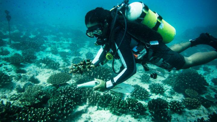 Mergulho virtual nas águas de Belize ensina como proteger os oceanos
