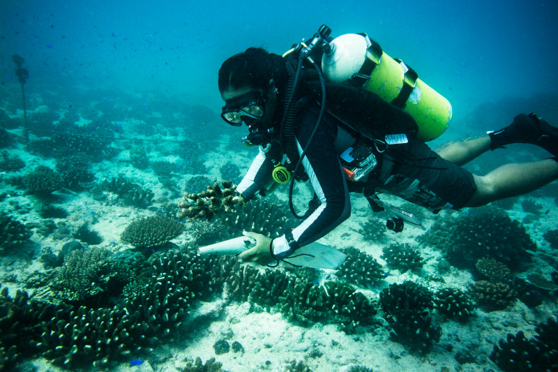 Kadir van Lohuizen / NOOR Seychelles, adaptation solutions  A coral nursery between Cousin and Cousine island, Praslin