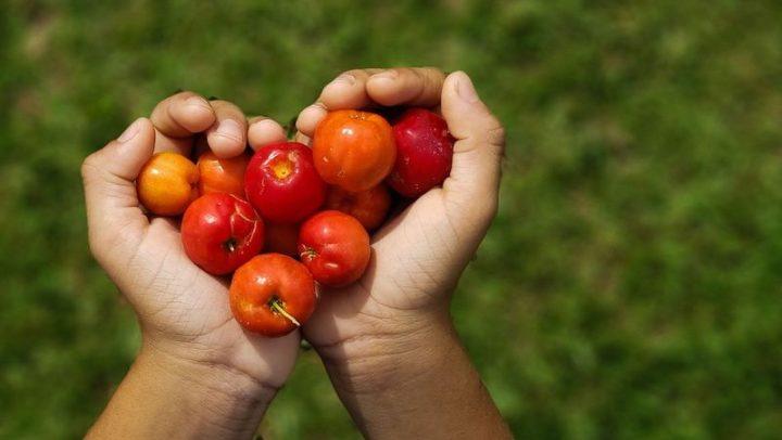 Cerrado: brincar na natureza traz benefícios para a saúde das crianças