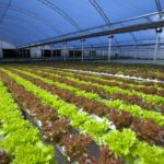 Conheça a primeira fazenda urbana dentro de uma indústria do mundo!
