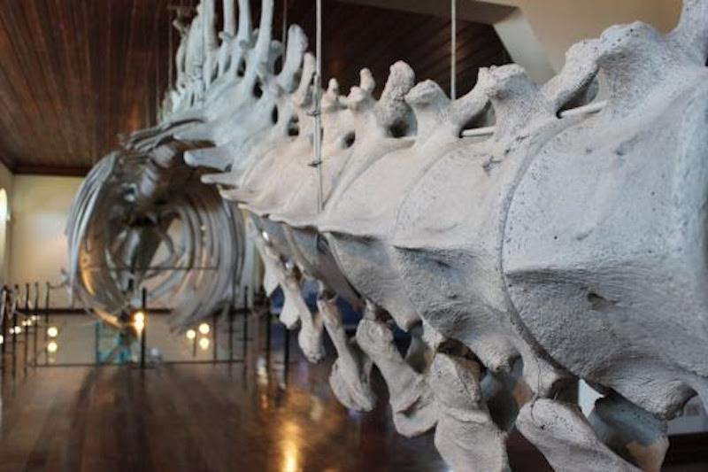 Dia das Crianças: visite de forma virtual as exposições Planeta Inseto e Museu de Pesca