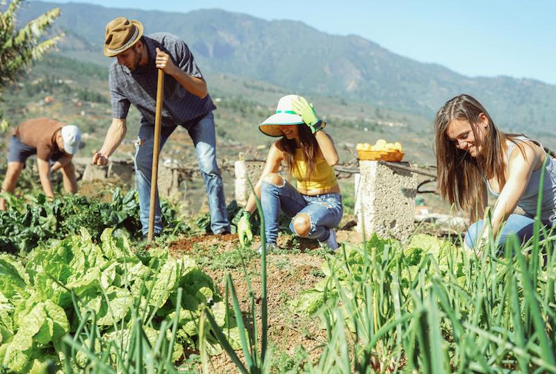 Semana do Sítio Ecológico: aula online e gratuita ensina a fazer transição para o campo
