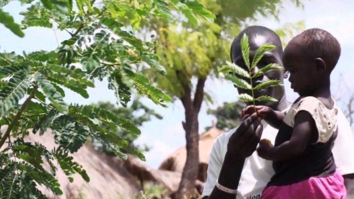 Refugiado do Sudão do Sul refloresta distrito de Uganda que o acolheu