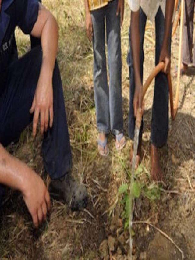 cropped-India-planta-50-milhoes-arvores-dia-bate-recorde-1200x852-1.jpg